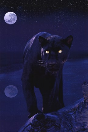 Framed Black Panther In Moonlight Print