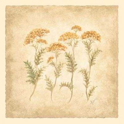 Framed Dancing Yarrow Print