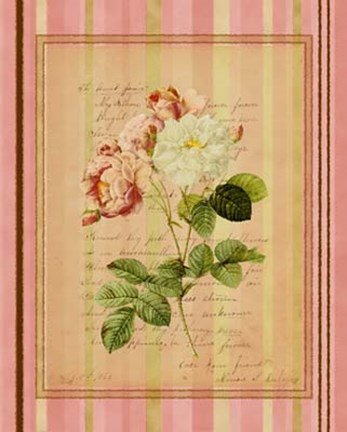 Framed Botanical Rose II Print