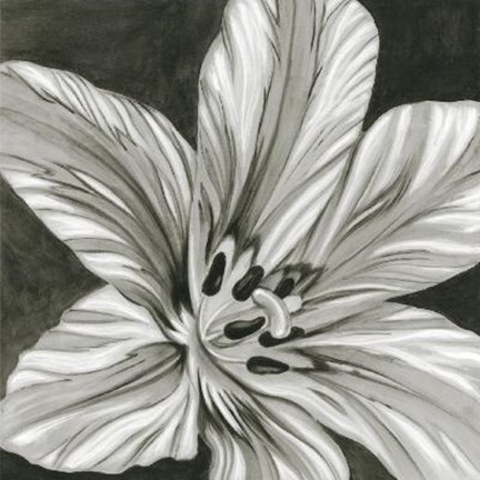 Framed Black White Flower Print