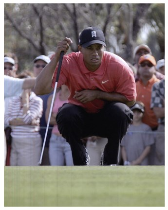 Framed Tiger Woods Lines Up Putt Print