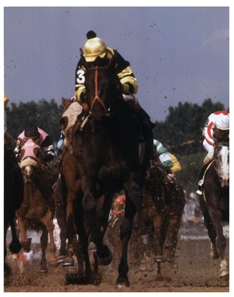 Framed 1977 Kentucky Derby Seattle Slew #816 Print