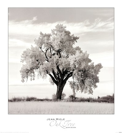 Framed Oak Tree Print