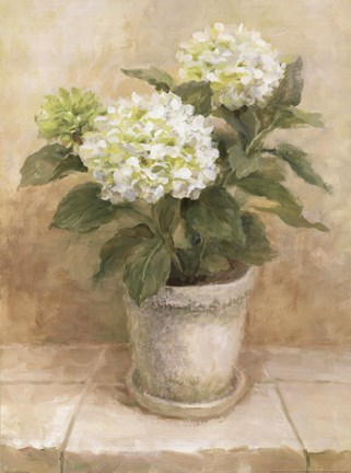 Framed Pot of White Hydrangea Print