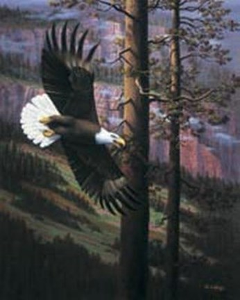 Framed Eagle in Trees Print