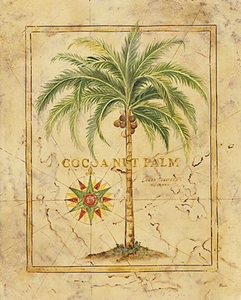 Framed Cocoanut Palm Print
