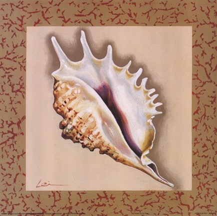 Framed Sea Shells I Print