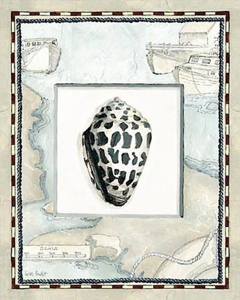 Framed Seashells Print