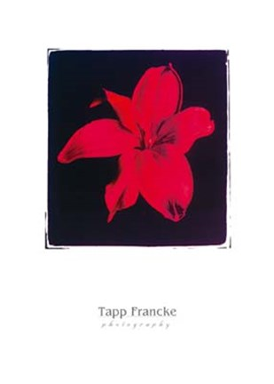 Framed Tapp Franke - Red Flowers Print