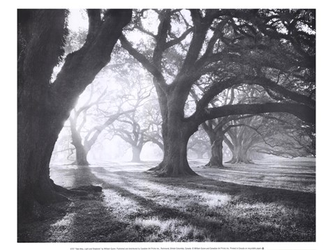 Framed Oak Alley, Light and Shadows Print
