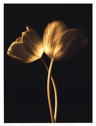 Framed Illuminated Tulips I Print