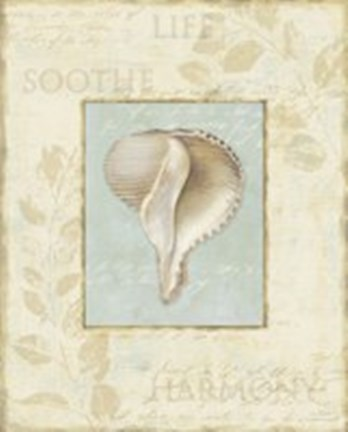 Framed Soothing Words Shells IV Print