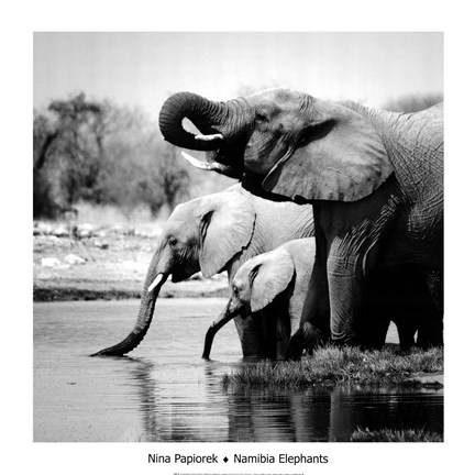 Framed Namibia Elephants Print