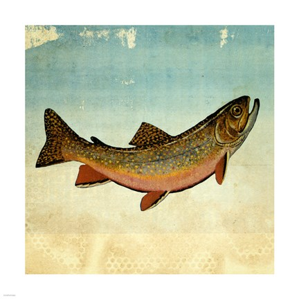 Framed Brown Trout I Print