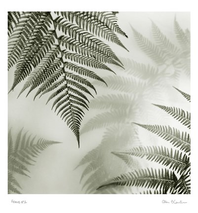 Framed Ferns No. 1 Print