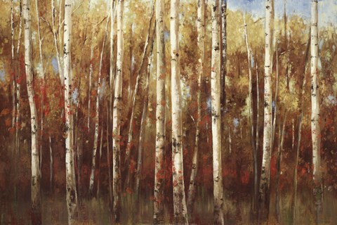 Framed Birch Forest Print