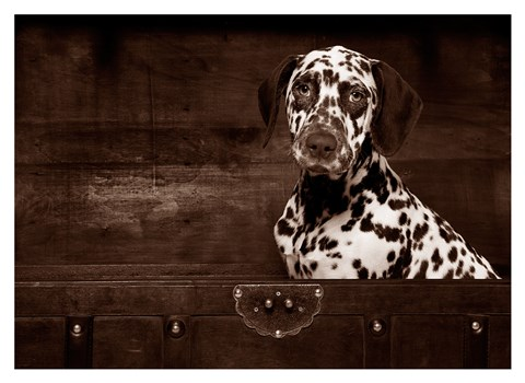 Framed Dalmatian Dog Print