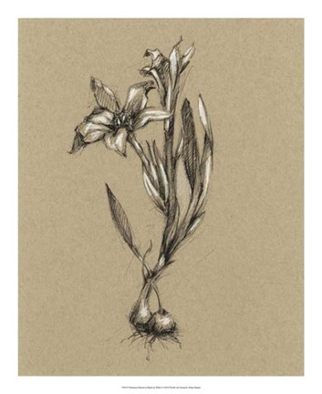 Framed Botanical Sketch Black & White I Print