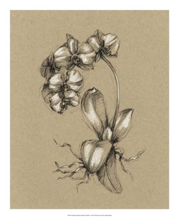 Framed Botanical Sketch Black & White V Print
