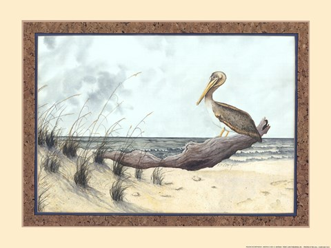 Framed Pelican On Driftwood Print