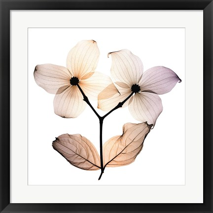 Framed Dogwood Print