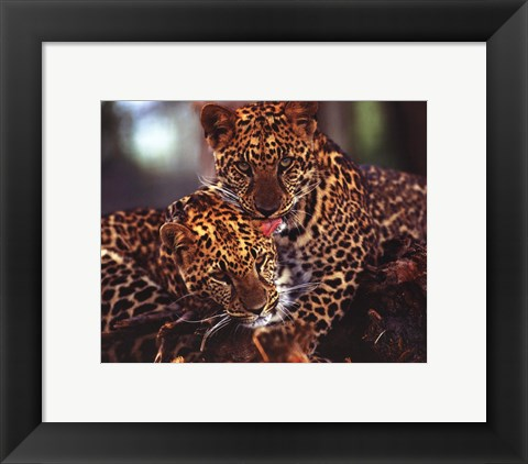 Framed Leopards Print