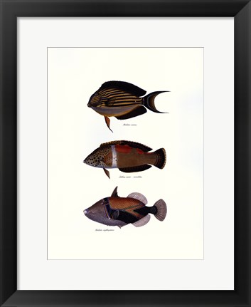 Framed Tropical Fish Print
