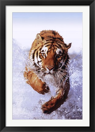 Framed Tiger Running Through Water Print