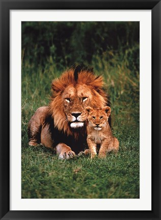 Framed Lion And Baby Print