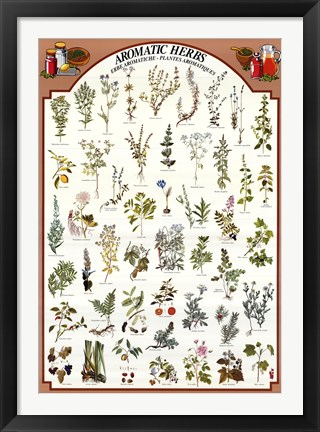 Framed Aromatic Herbs Print
