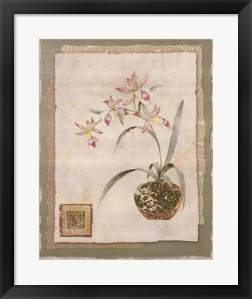 Framed Orchid II Print