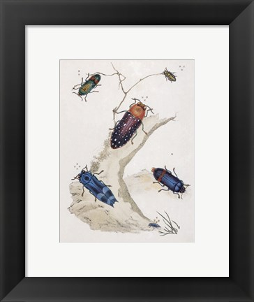 Framed Chelsea Beetles-2 of 3 Print
