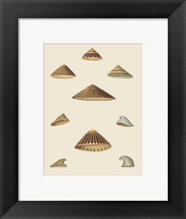 Framed Shells-3 of 8 Print