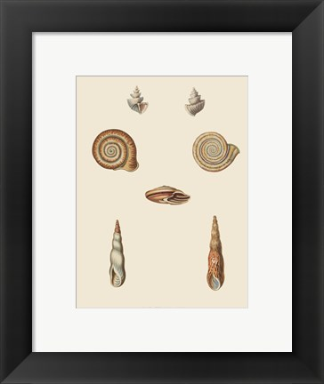 Framed Shells-6 of 8 Print