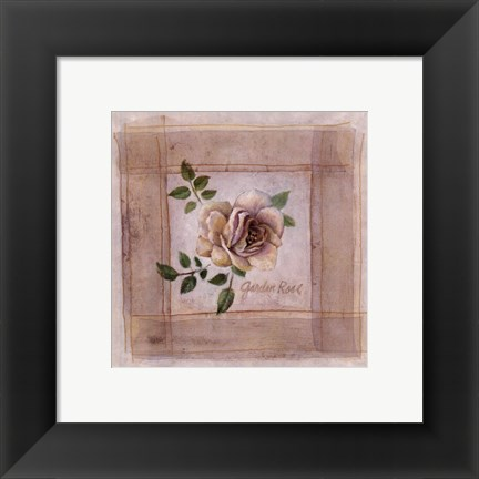 Framed Garden Rose Print