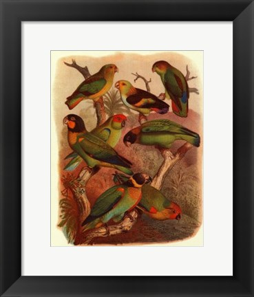Framed Tropical Birds IV Print