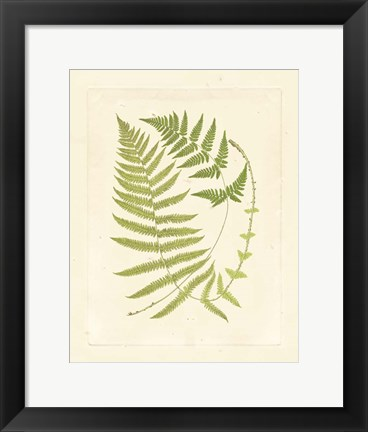 Framed Ferns with Platemark V Print