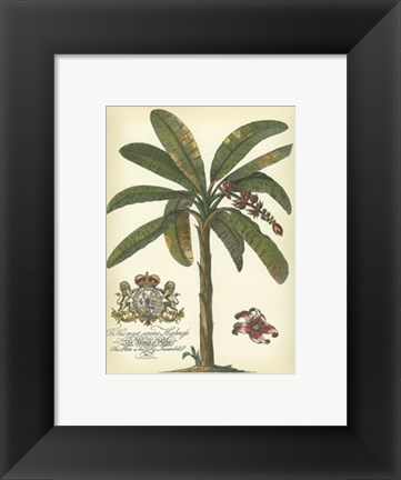 Framed Palm and Crest II Print