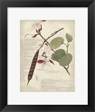 Framed Botanical III Print