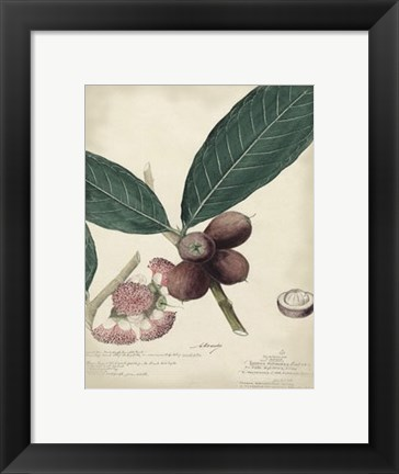 Framed Botanical IV Print