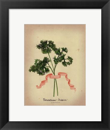 Framed Herb Series II Print
