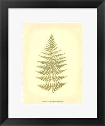 Framed Lowes Fern V (PP) Print