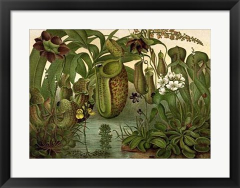 Framed Venus Fly Trap Print