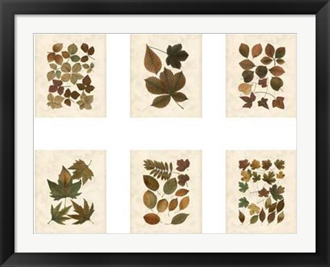 Framed Lodge Leaf Collection Print