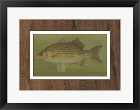 Framed White or Silver Bass Print