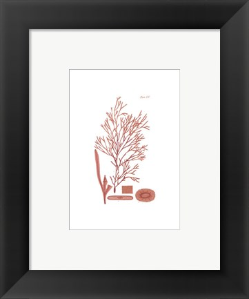 Framed Shades of Coral I Print