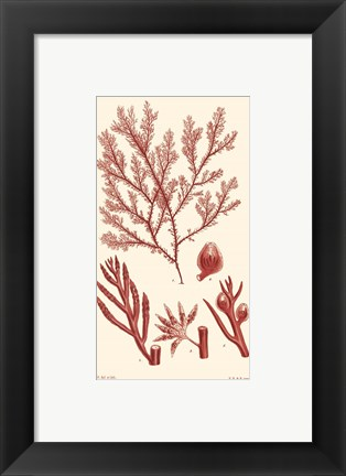 Framed Shades of Coral IV Print