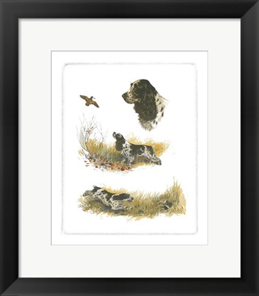 Framed Cocker Spaniel Print