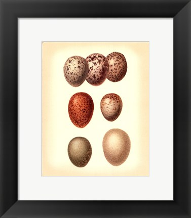 Framed Bird Egg Study I Print