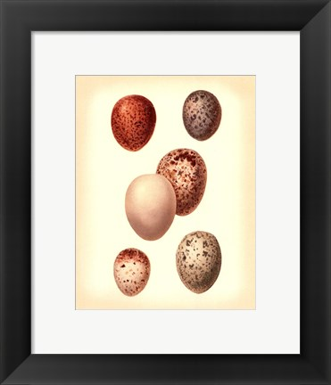 Framed Bird Egg Study III Print